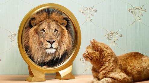 León y Gato - PsicoWisdom